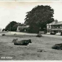 New Forest Front 001