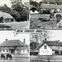 New Forest Front 002